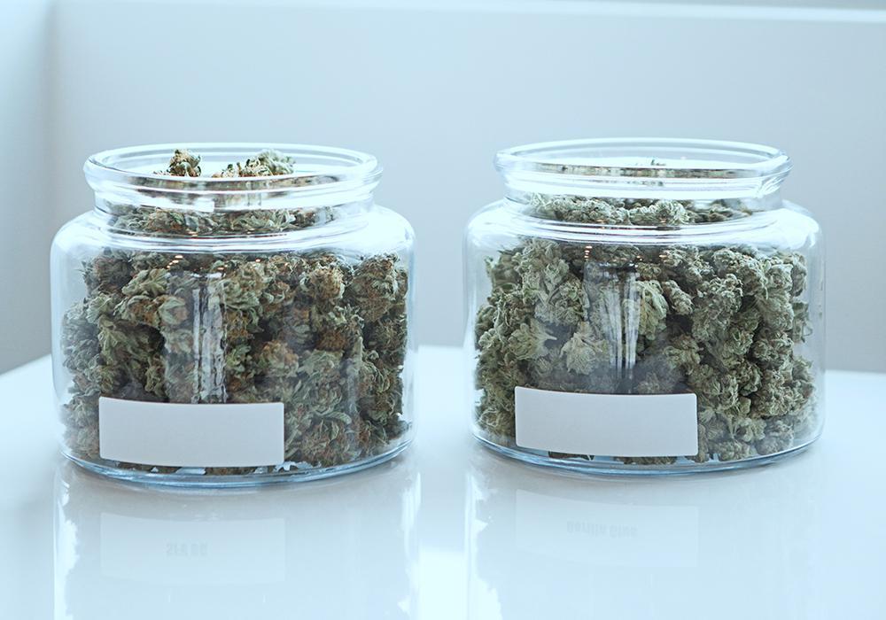 cannabis-terapeutica-light-e-cannabidiolo-le-differenze