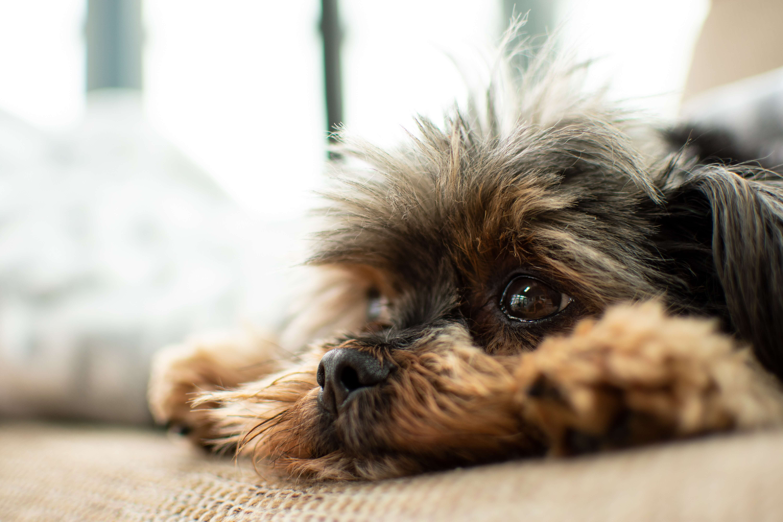 cbd-utilizzo-cani-e-gatti-patologie