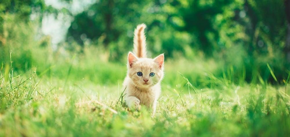 olio canapa salute gatti cani