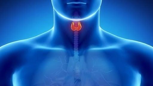 sistema endocrino e cbd